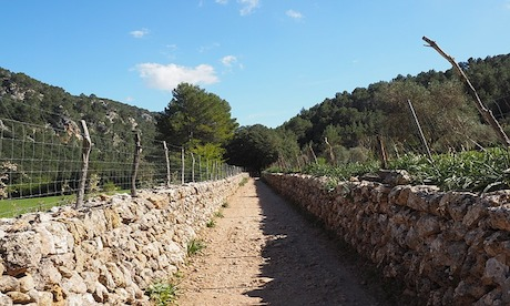 Mallorca – quo vadis?